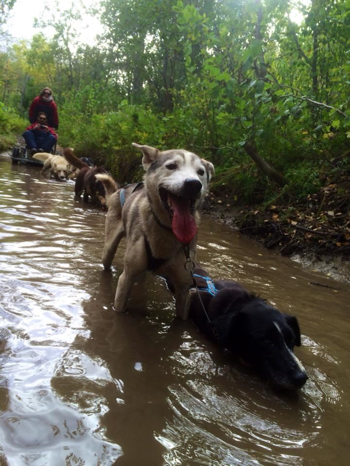 Husky Kennels visit and hands-on puppy experience - Arctic Adventure Tours
