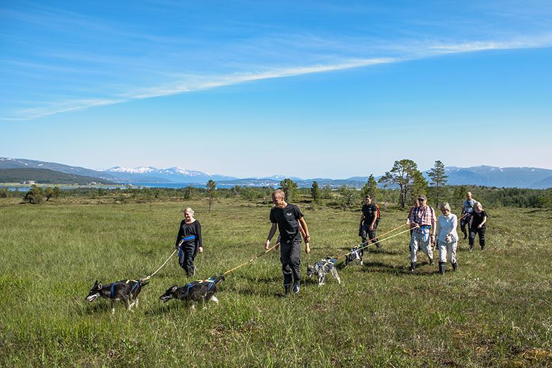 Puppy Training – Tromsø Villmarkssenter