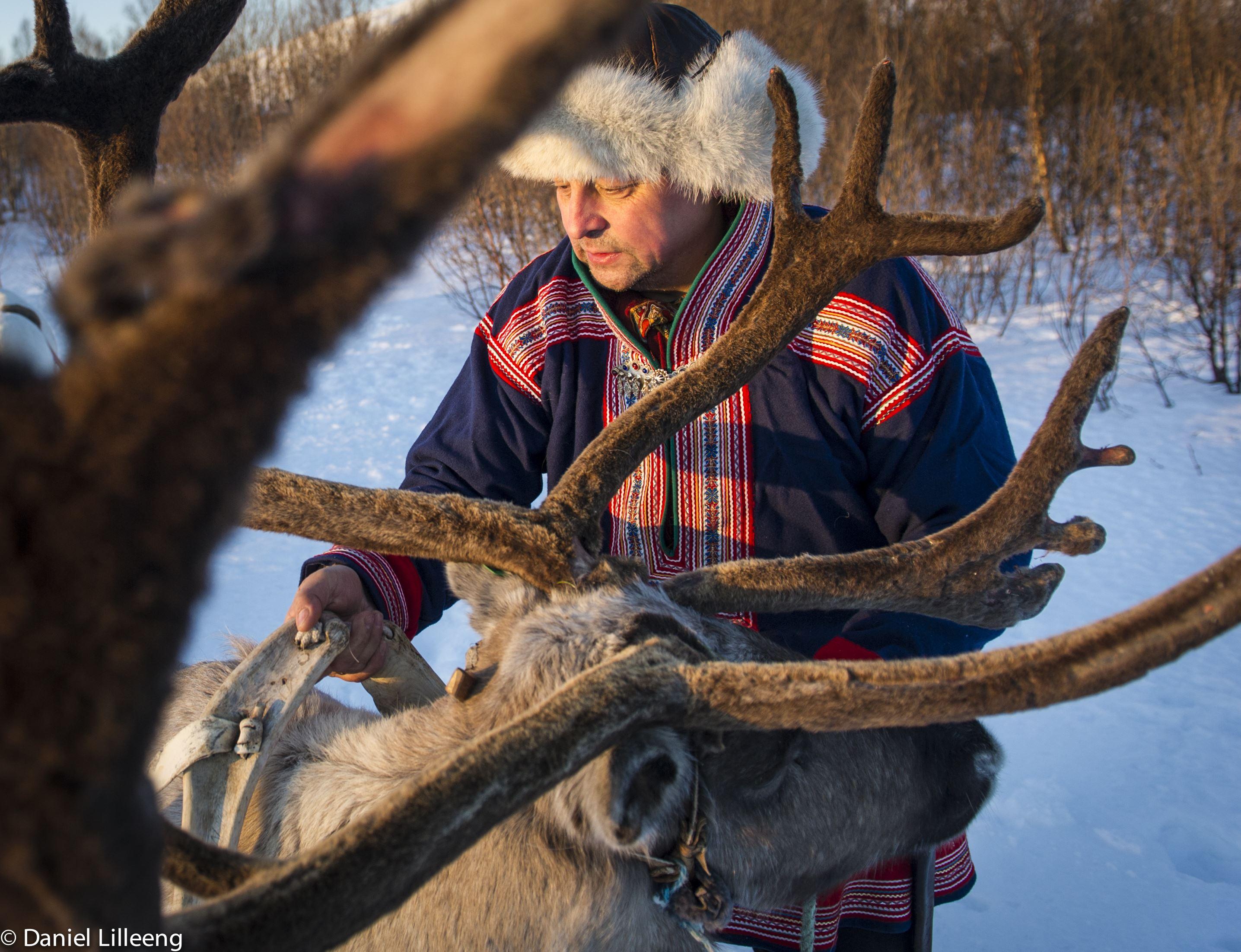 Reindeer Sledding – Tromsø Villmarkssenter