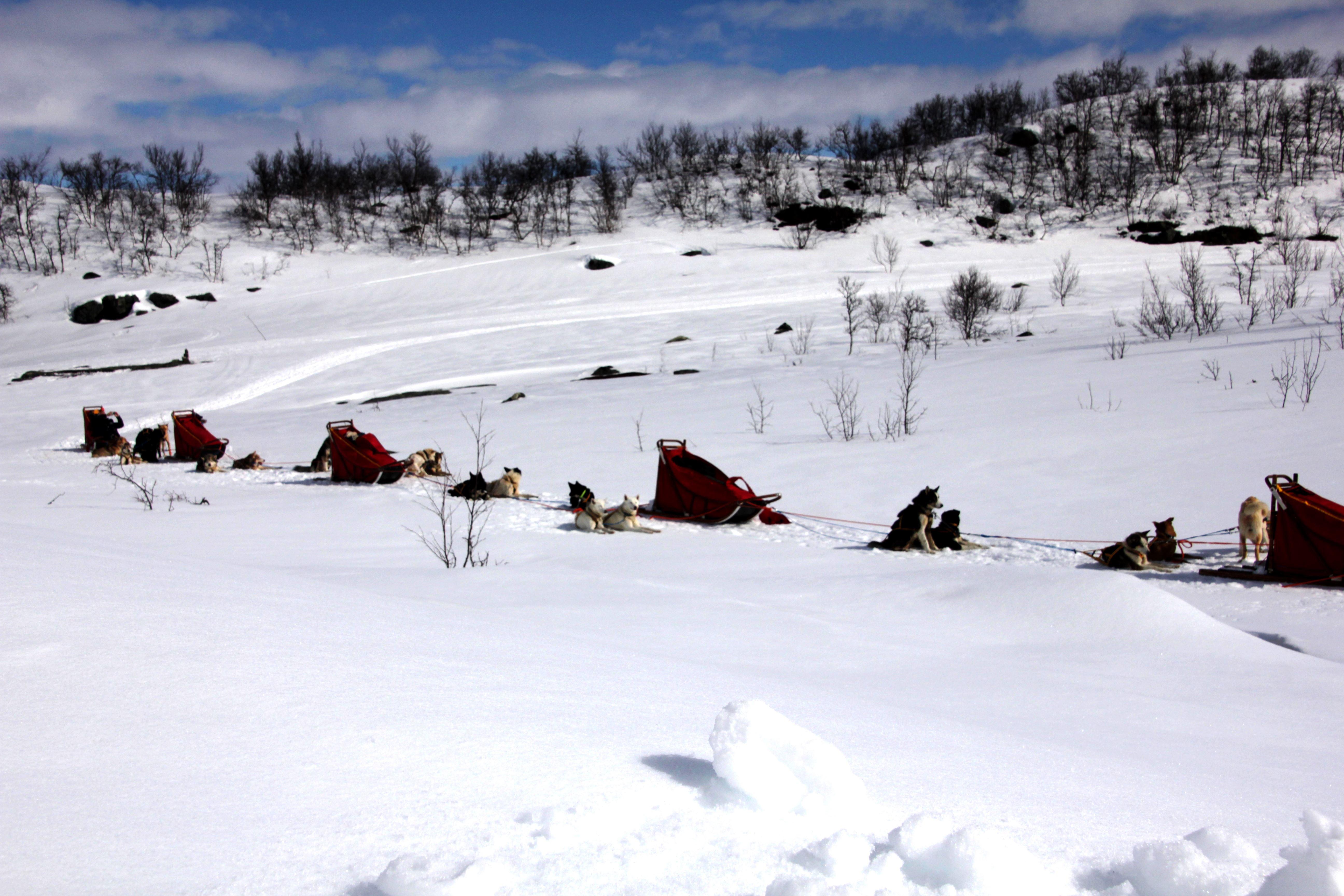 En dag med aktiv hundeslede - Active Tromsø