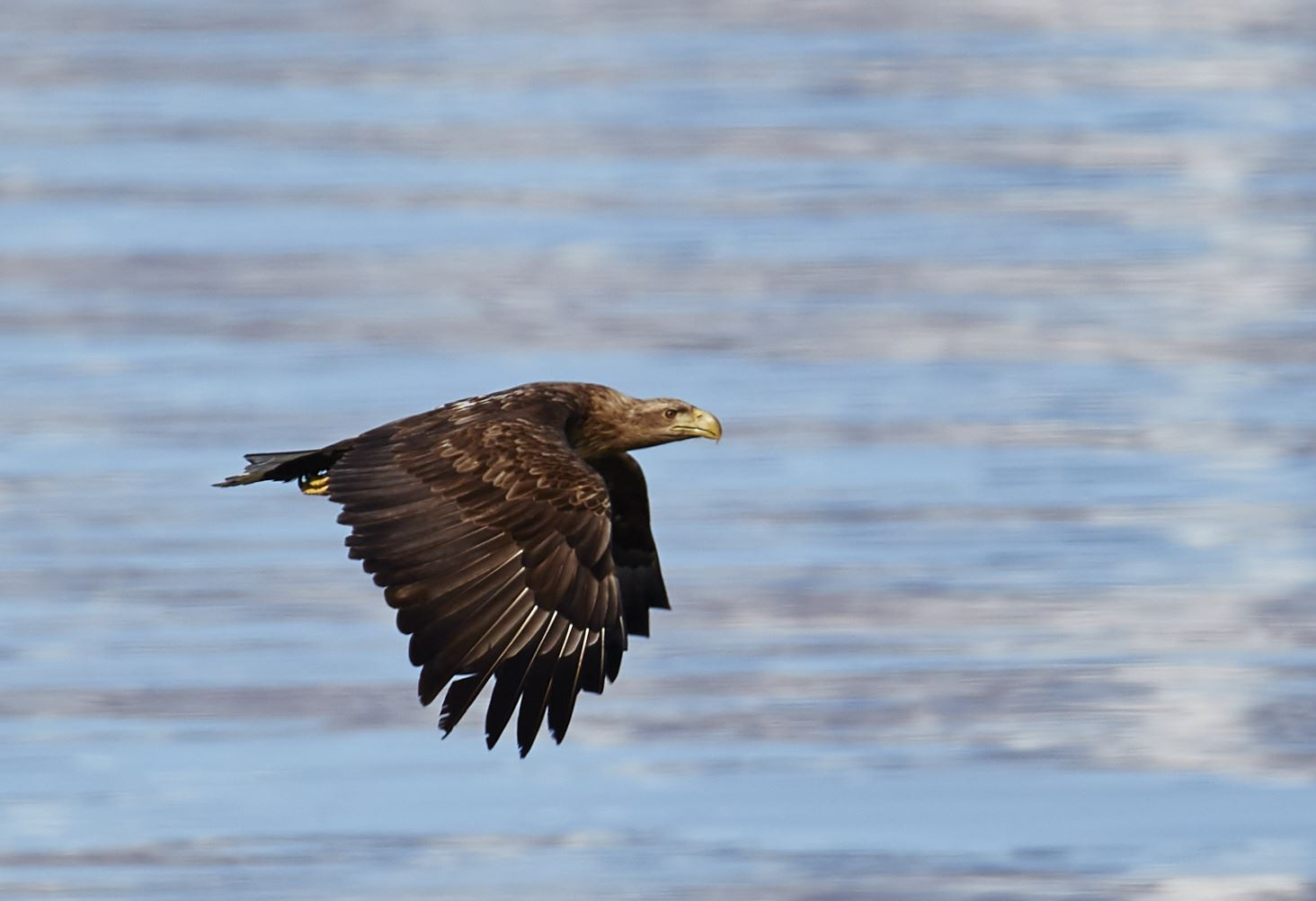 Sea Eagle, Fishing, Midnight Sun hiking & Accommodation in the Lyngen Alps – Green Gold of Norway
