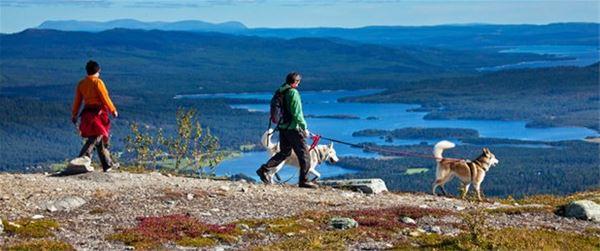Fjällvandra med guide start kl.09.30