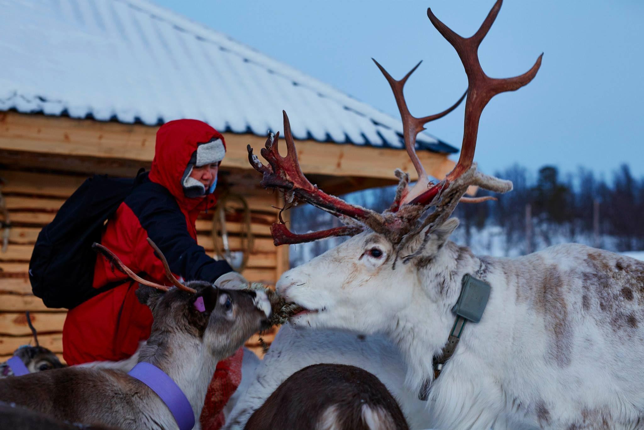 Tur med Reinsdyr og Snøscooter - Arctic Guide Service