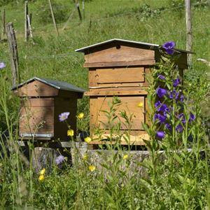 Du miel et des abeilles