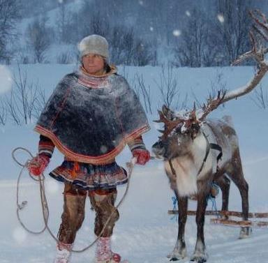 Reinsdyr mating, samisk historie og kort Reinsledetur - Tromsø Arctic Reindeer