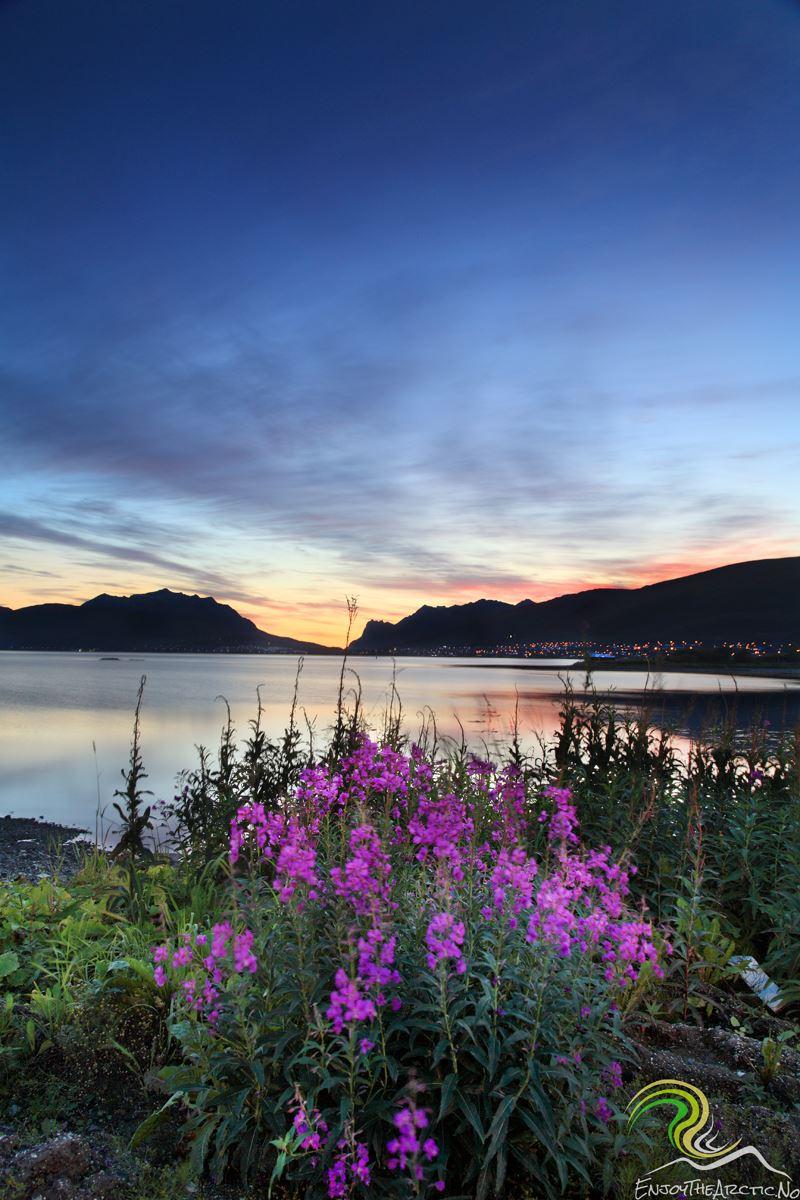 Fototur – Enjoy the Arctic