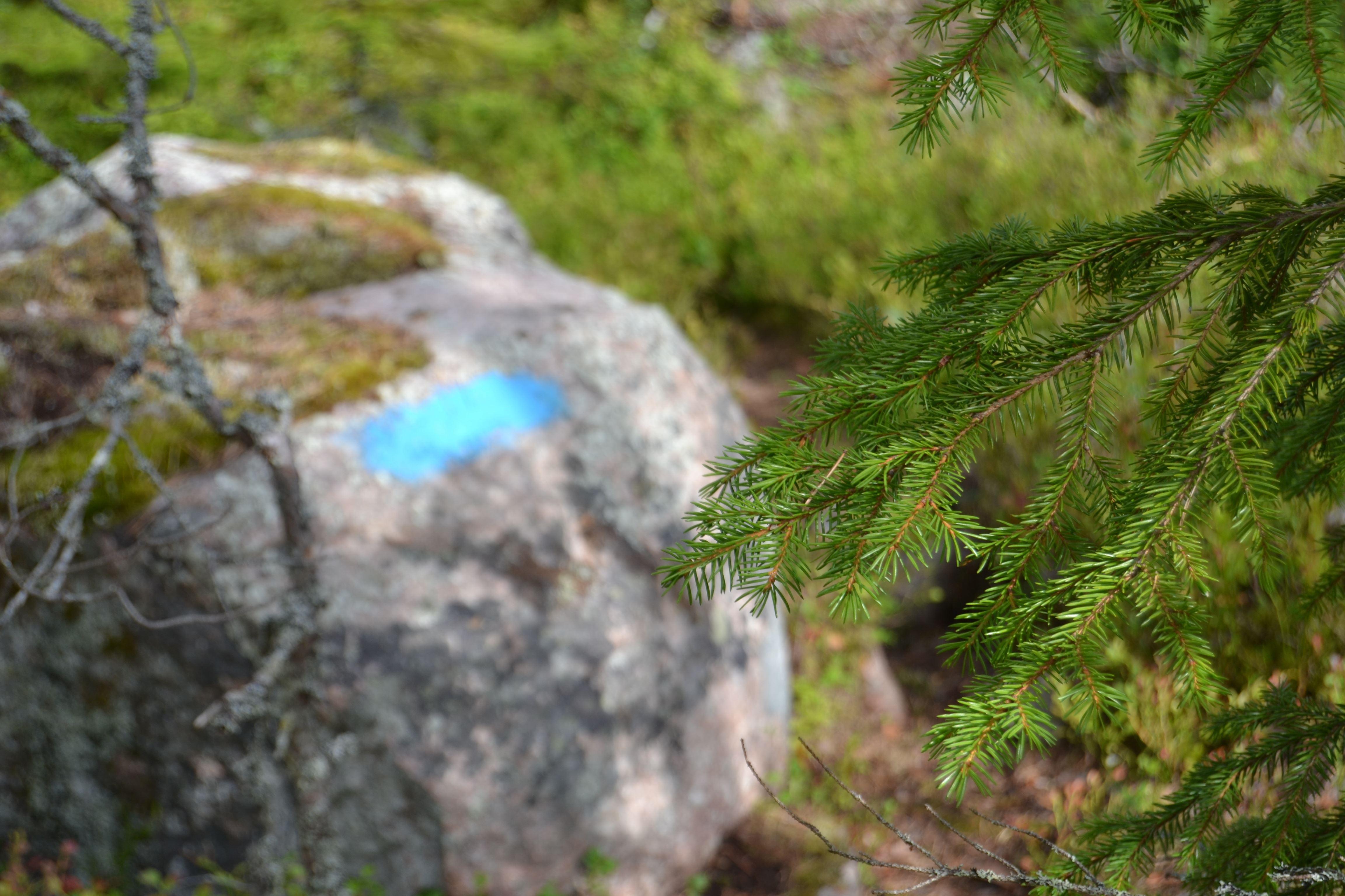 Malin Löthmyr,  © Visit Glada Hudik, Avholmsbergets natur & kulturstig
