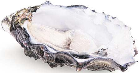 Auster- und MuschelnSafari