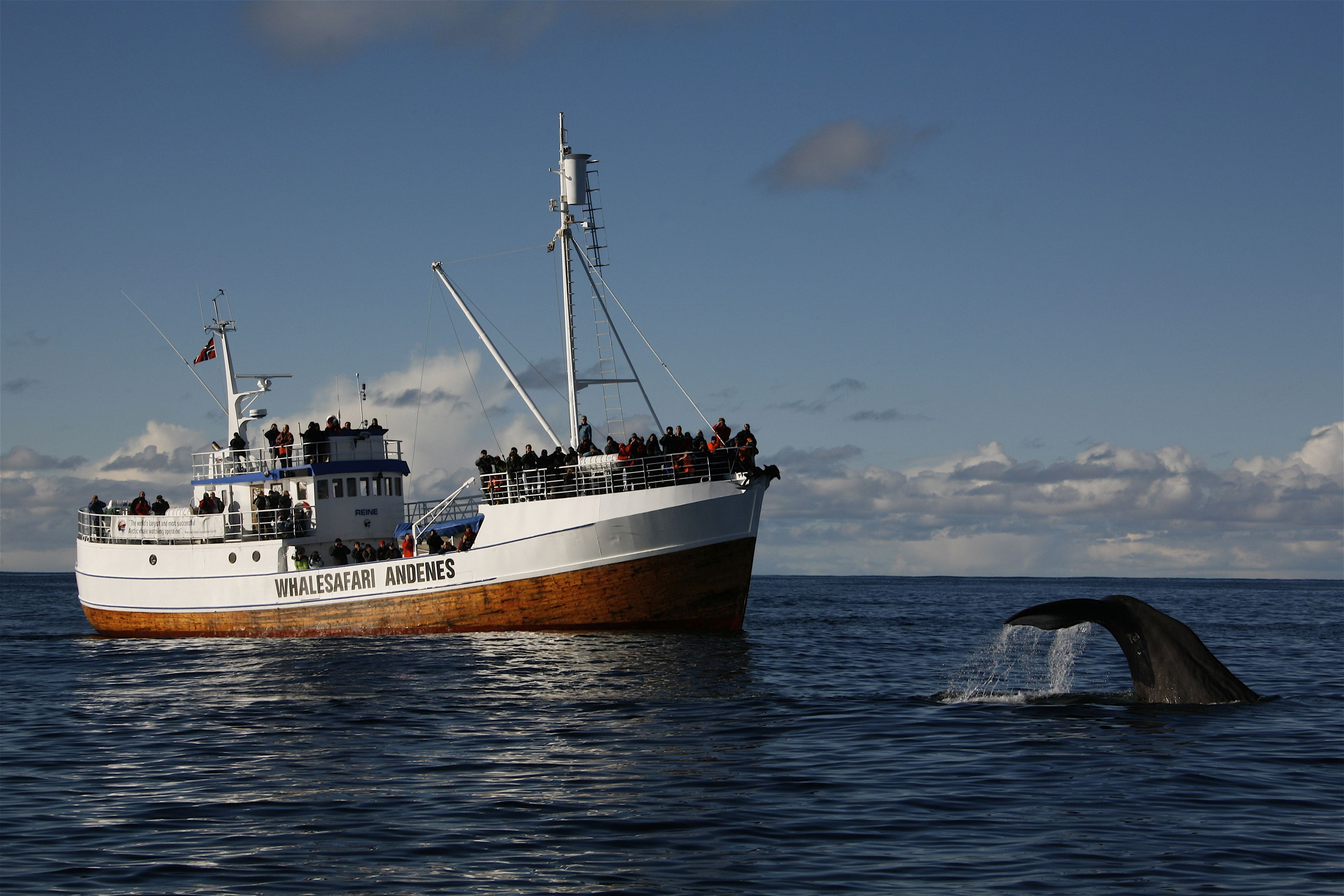 © Hvalsafari AS, Whale Safari Andenes – Hvalsafari AS