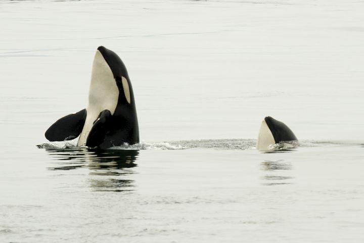 Den ultimate hvalsafarituren – Arctic Explorers