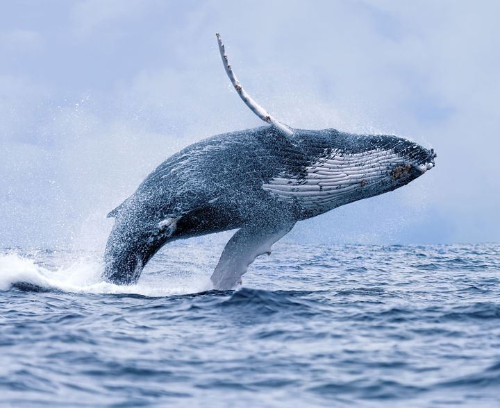 The ultimate Whale Watching RIB tour – Arctic Explorers