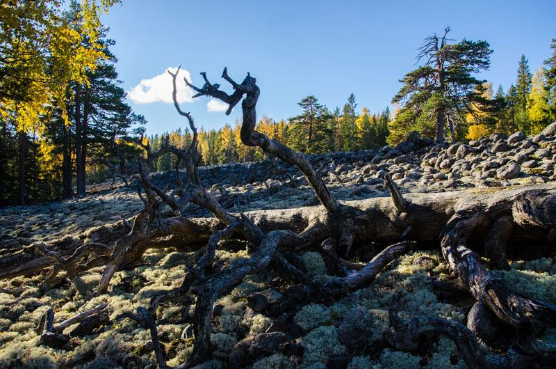 Vandring till Stenören - en av Sveriges högst belägna klapperstensfält