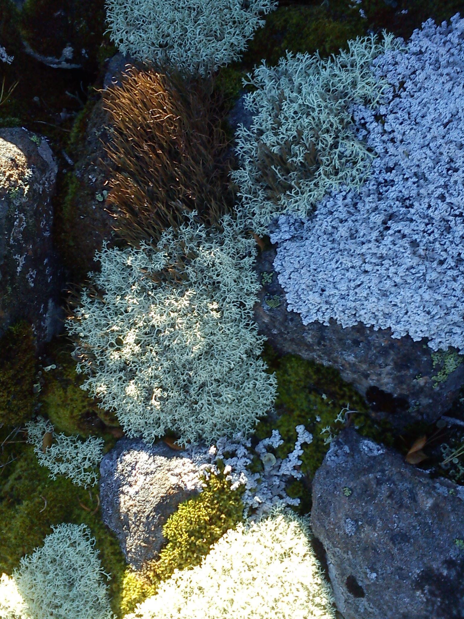 Hiking tour to the singlefields of Stenören
