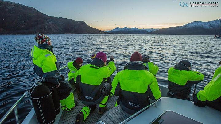 Historic Whale Watching, Tromsø – Arctic Explorers