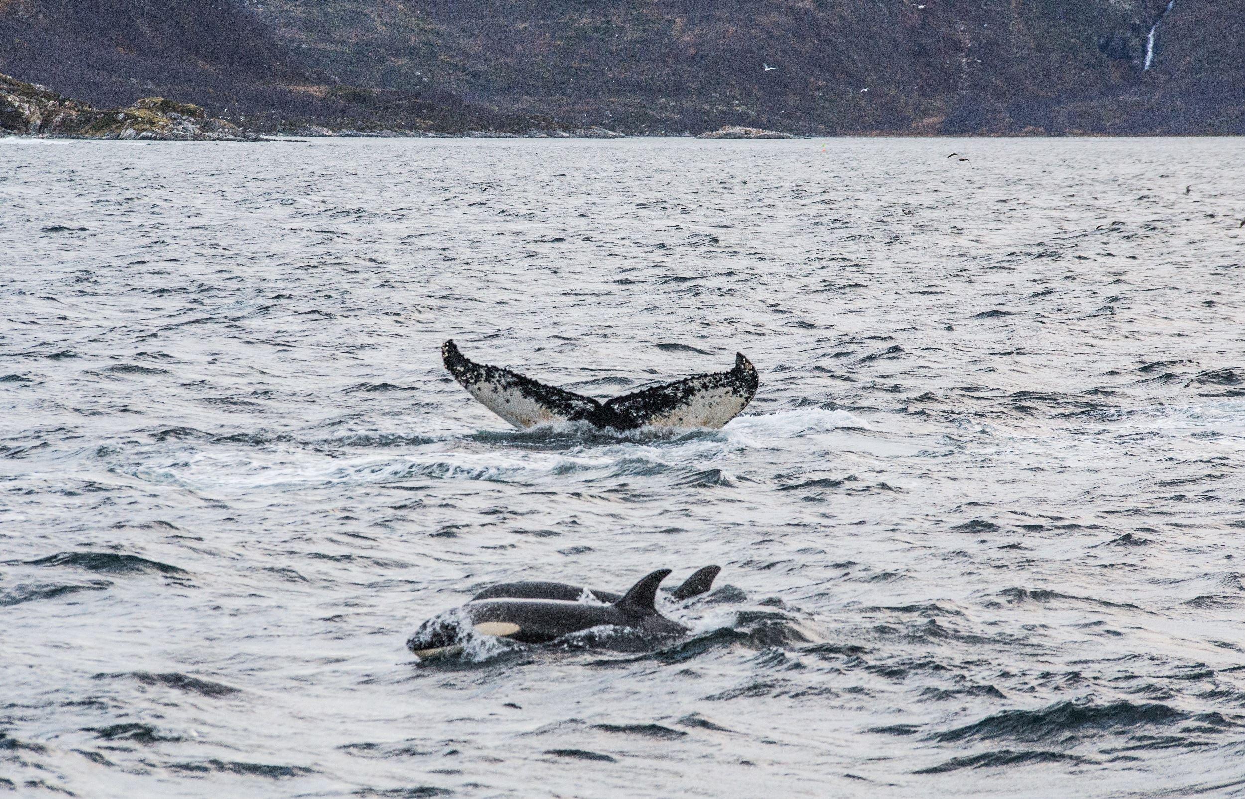 Whale Safari on the world's smallest cruise boat – Northern Sea Adventure