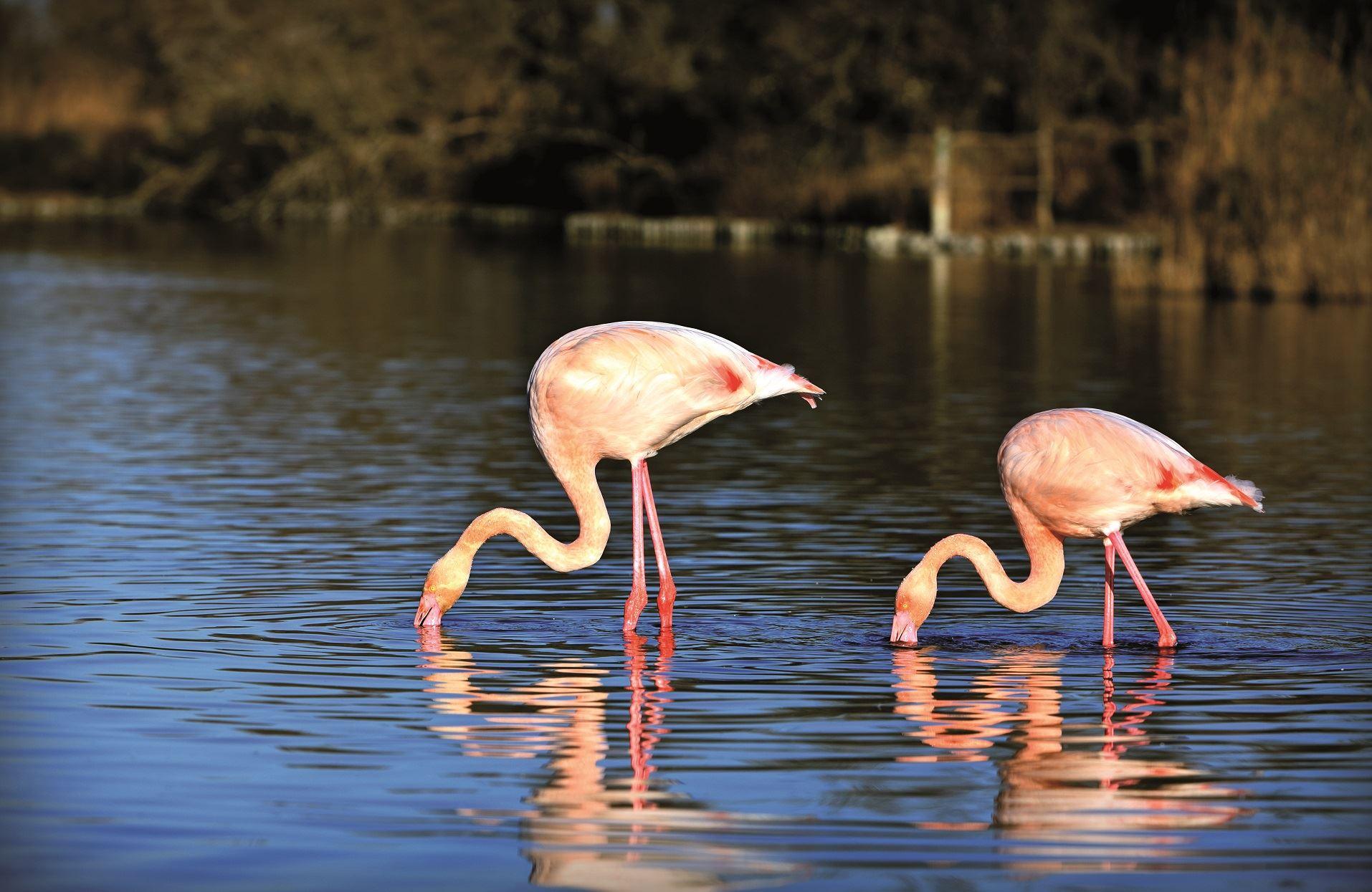 Safari nature en Camargue - La Camargue Autrement