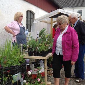Plant flea market, Smygehuk
