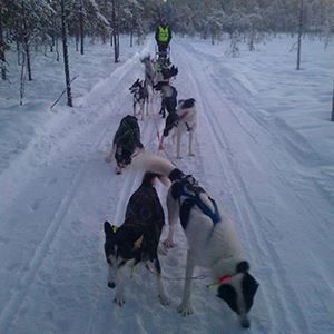 Dog sledding with River Lake Huskies