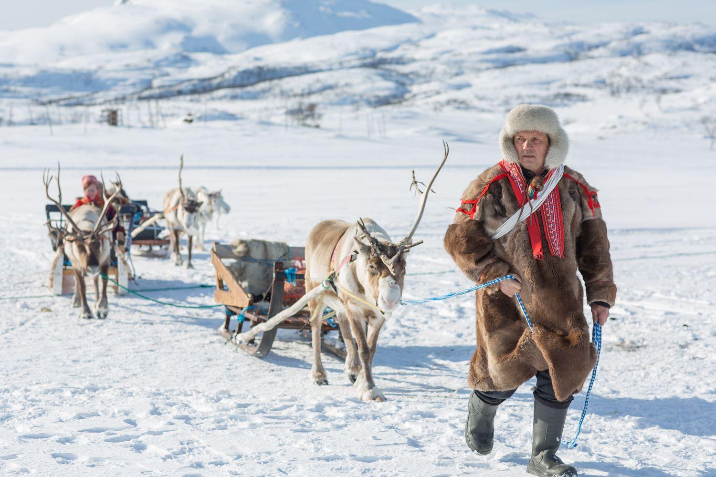 Opplev reinsdyr i samiske omgivelser - Sami Adventure
