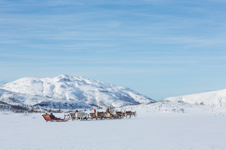 Reindeer Sledding with Guide – Sami Adventure