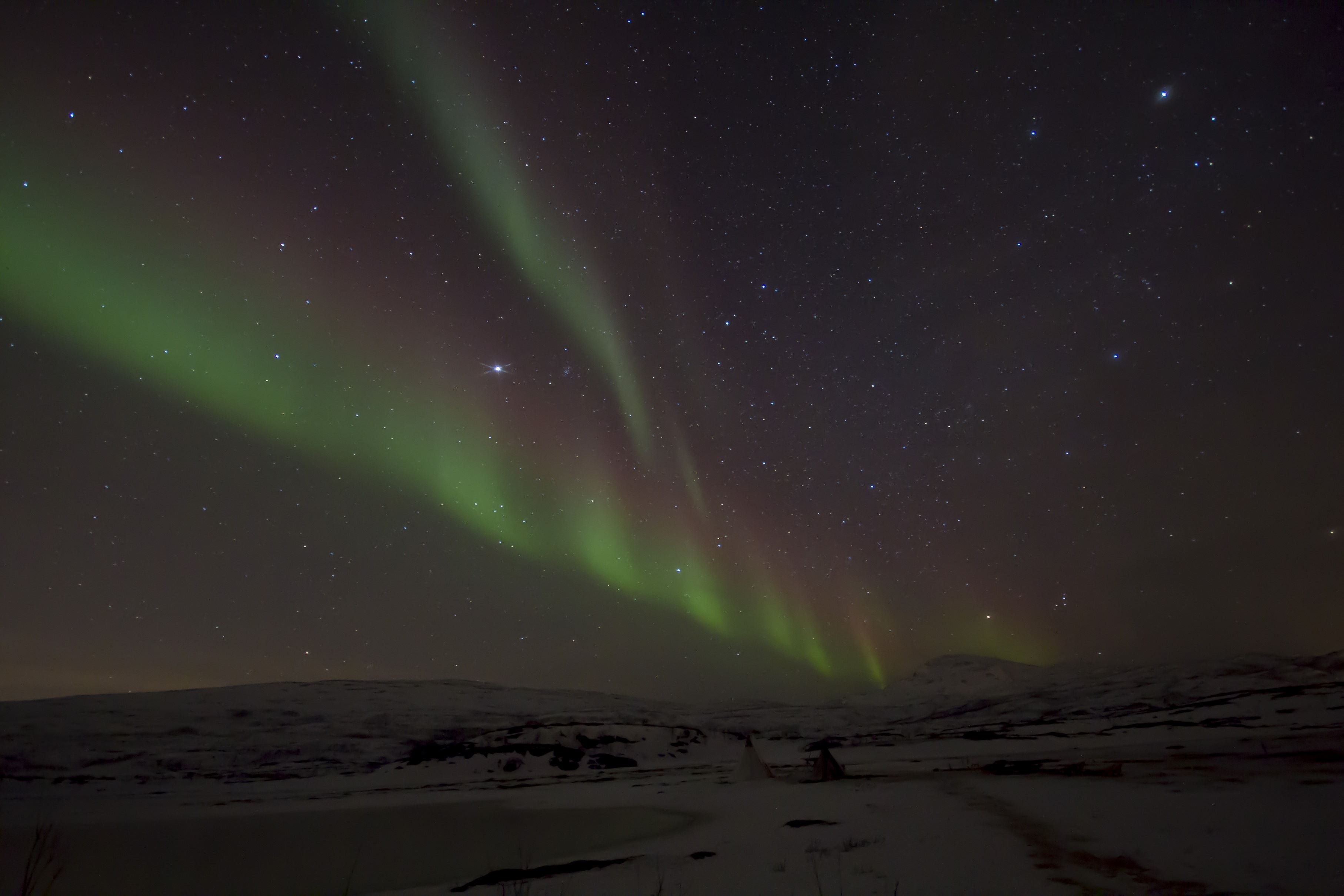 Nordlys med reinsledetur– Sami Adventure