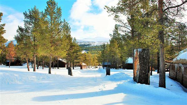 Sjodalen Hyttetun og Camping AS
