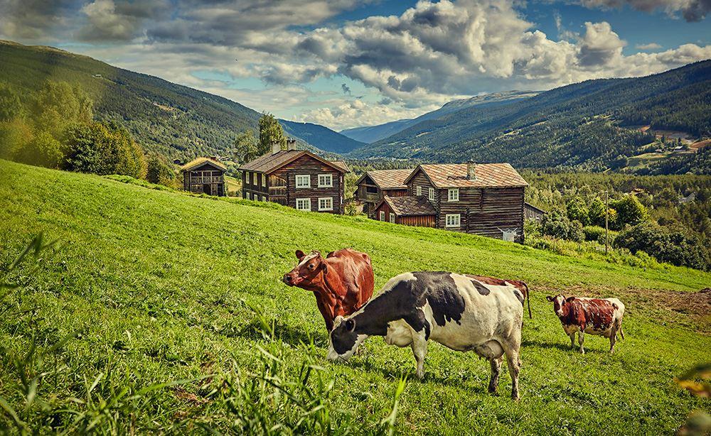 Cathrine Dokken,  © ©Heidal Ysteri , Heidal Ysteri