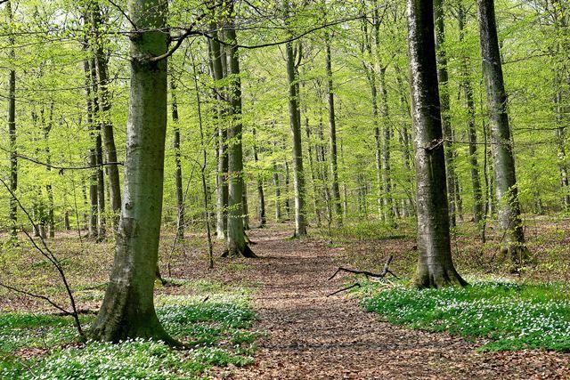 Foot path - Sölvesborgsleden