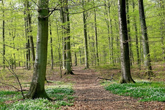 Ryssberget Nature Reserve