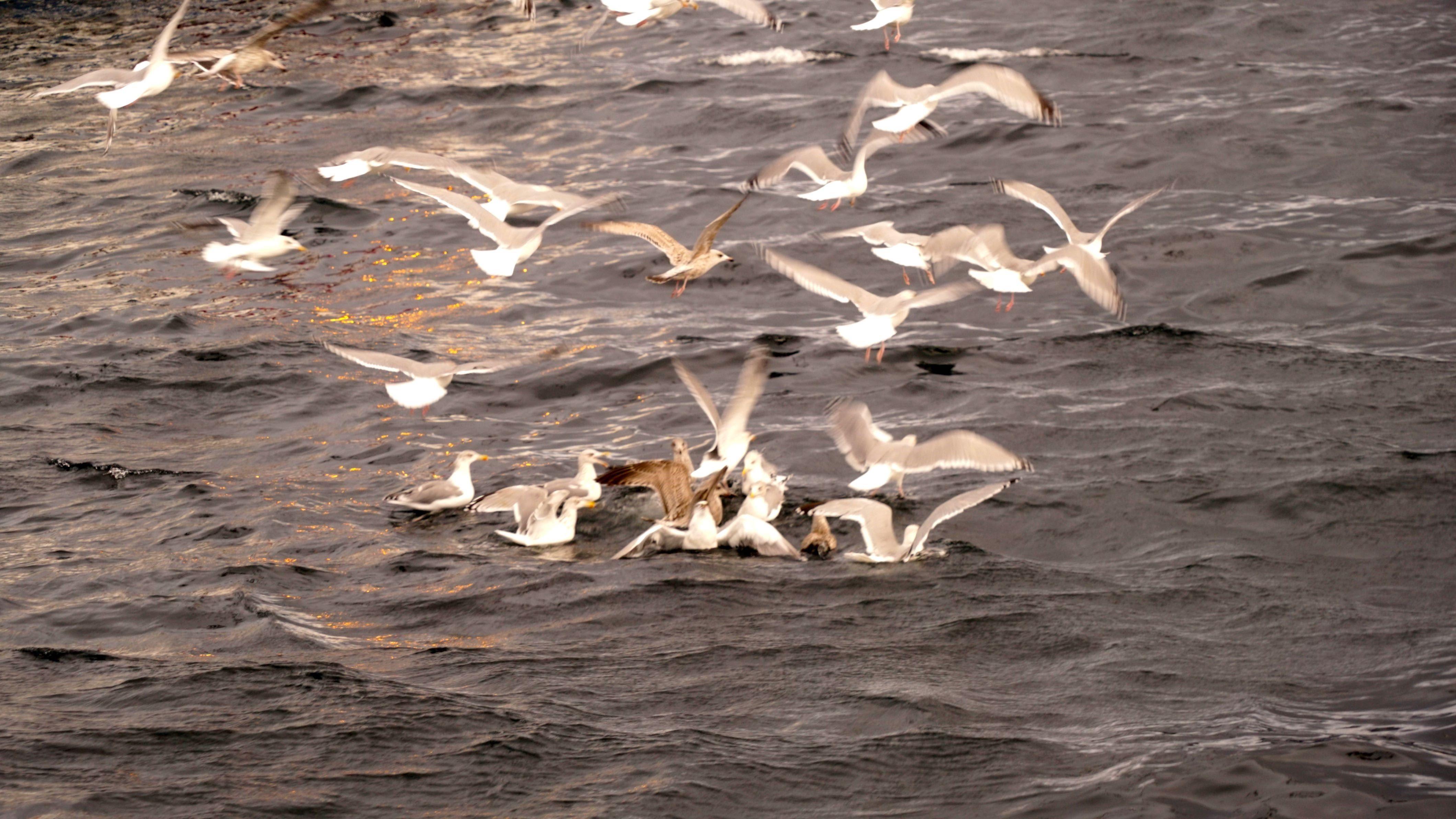 Bird feeding with the Yacht
