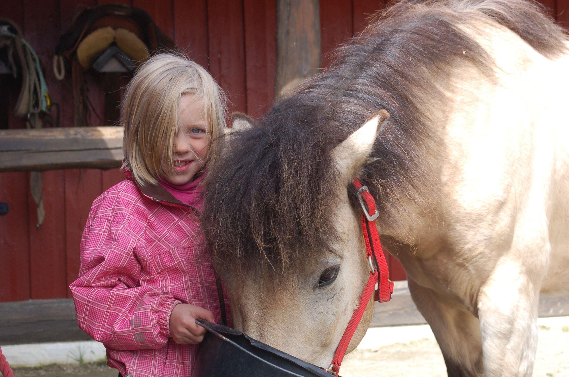 © ©Kvistli Islandshester , Velkommen til fantastiske opplevelser i høyfjellet med islandshest!