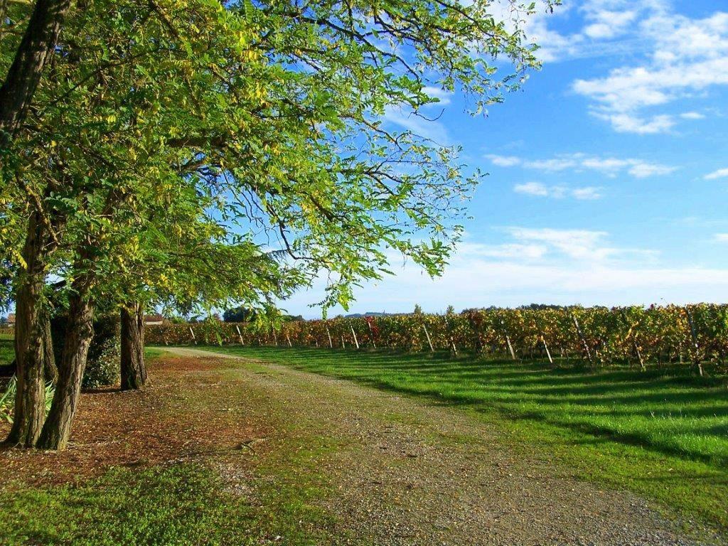 Fronton : le vignoble des Toulousains