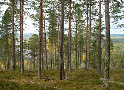 Mjösjöbergets naturreservat
