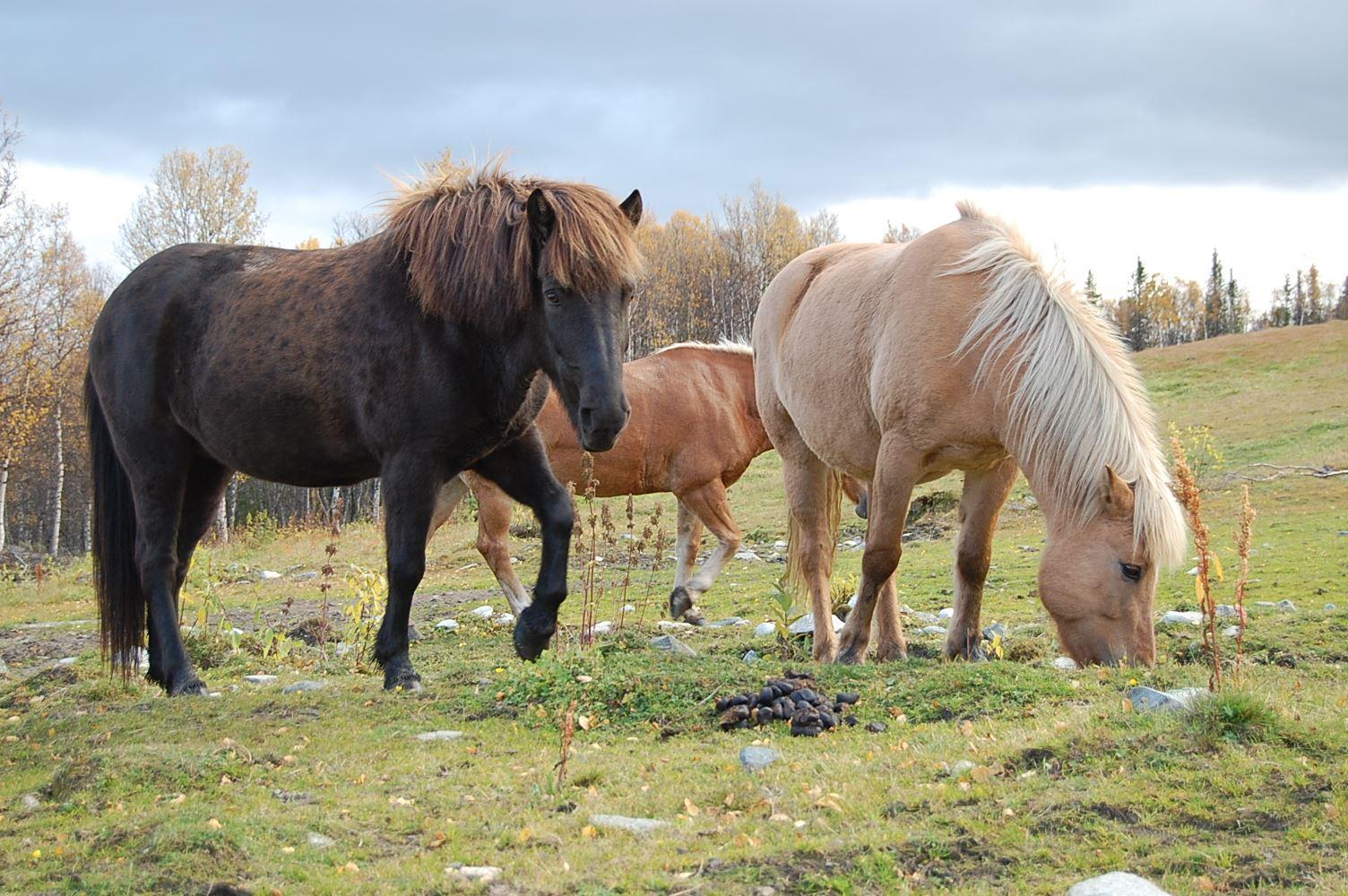 Øien Øvre Hesteaktiviteter
