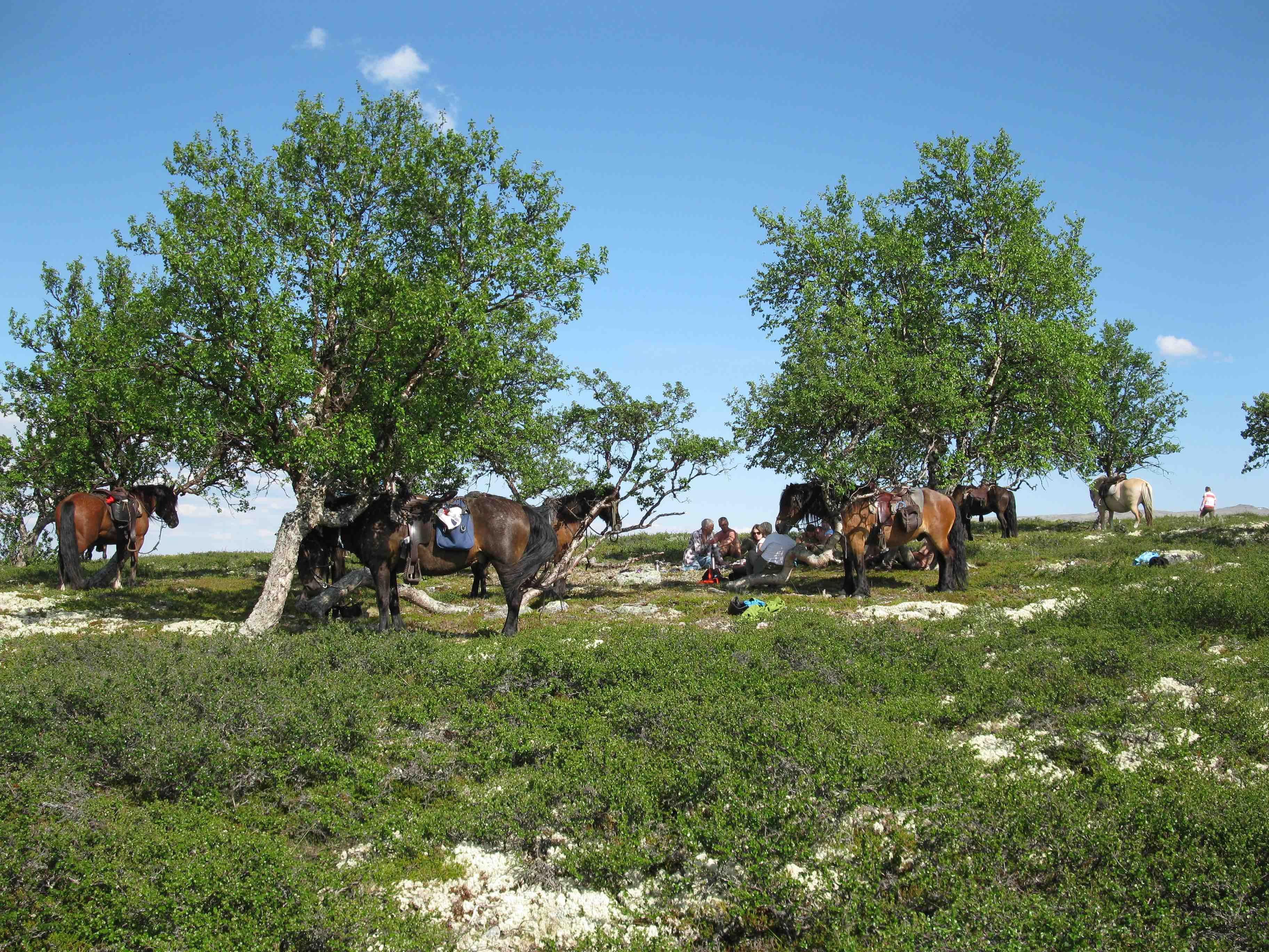 Øien Øvre Horse activities