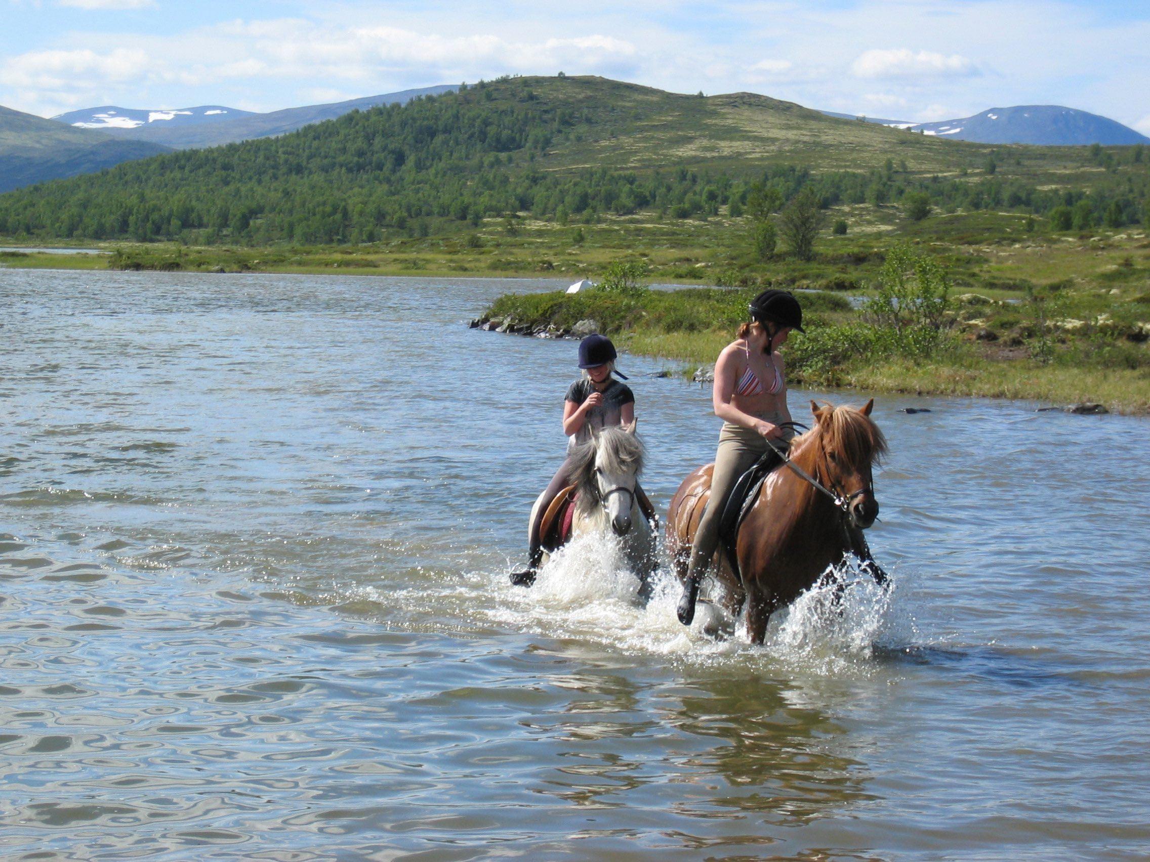 Horseback riding at the Dovrefjell plateau
