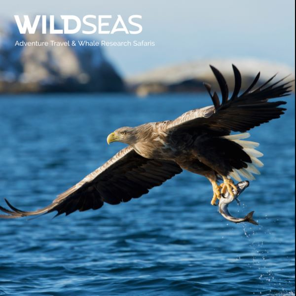 Fjord and Arctic Wildlife Safari - Wild Seas