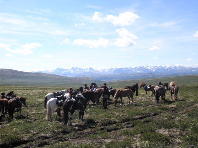 Velkommen til fantastiske opplevelser i høyfjellet med islandshest!