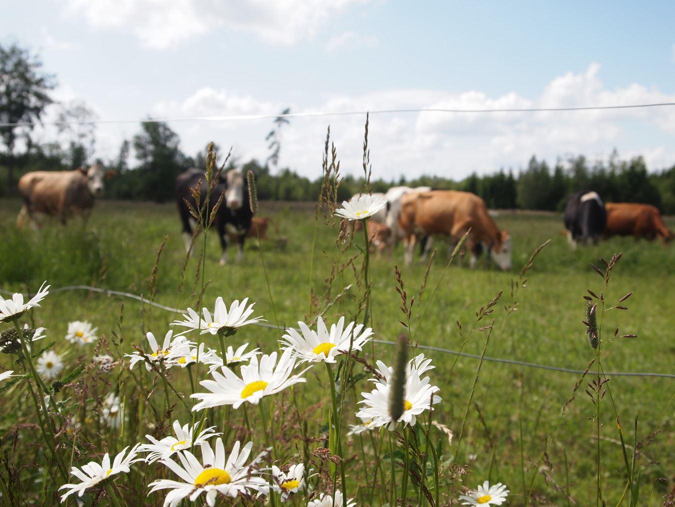 Farmsafari on Kastebergs Gård (copy)