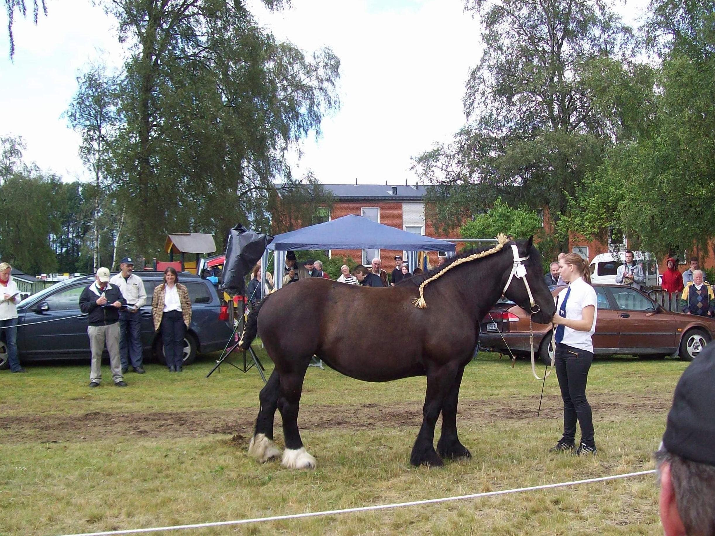 Horse viewing at Stationsområdet, Hamneda