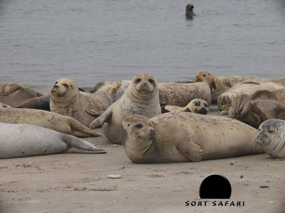 Seal Safari