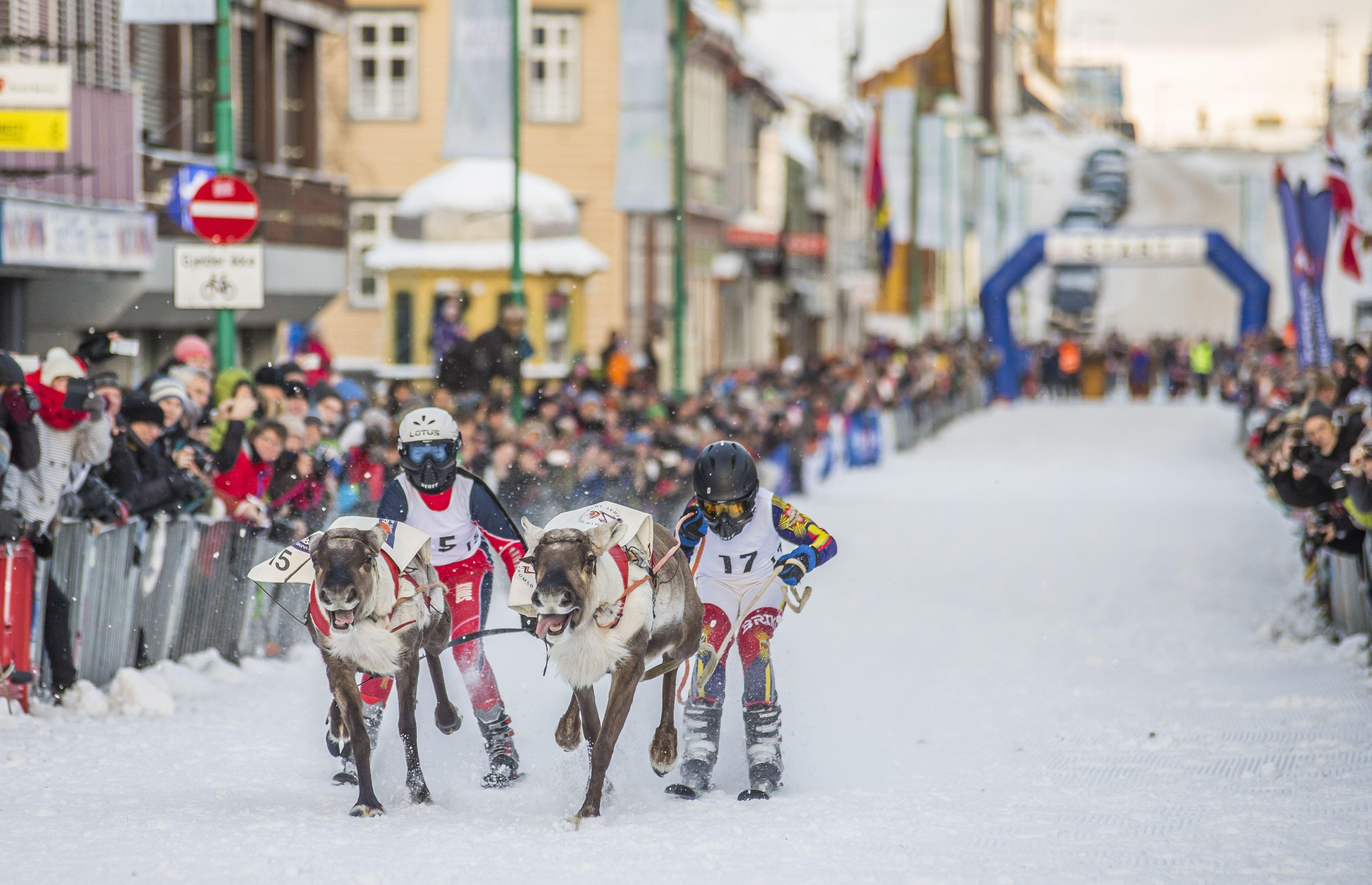 © Truls Tiller, Samisk uke med NM i reinkappkjøring og i lassokasting