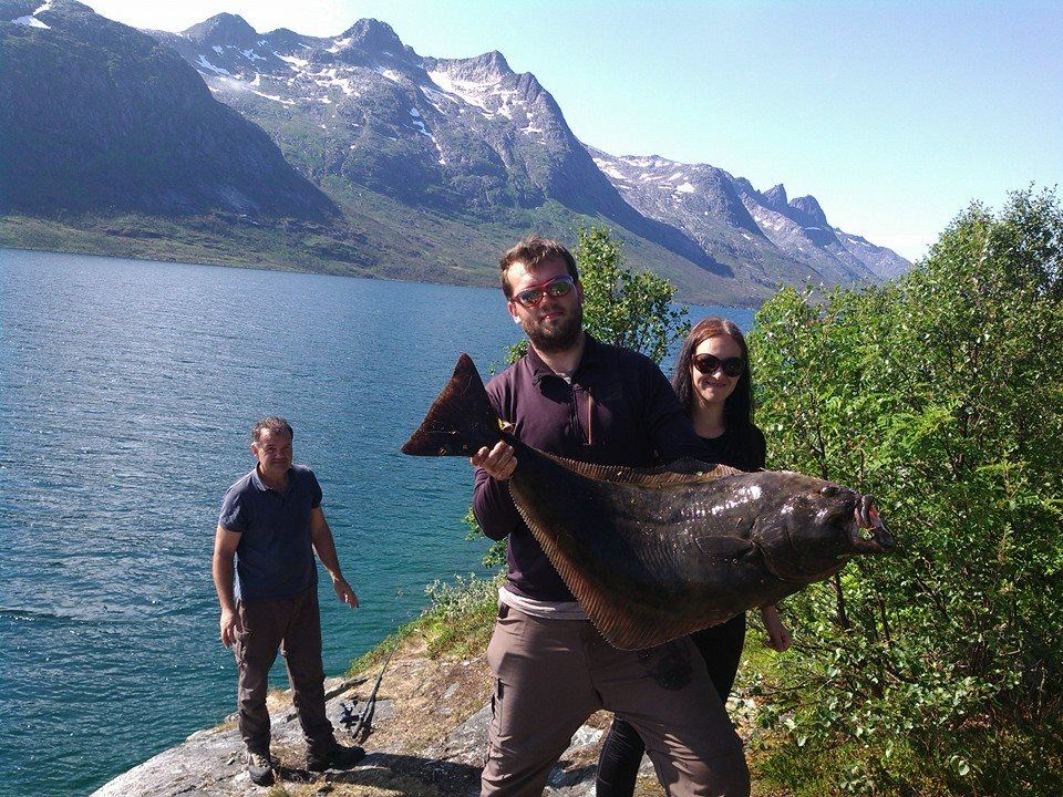 Sightseeing & Fjord Excursion from Tromsø on request - Flexitour
