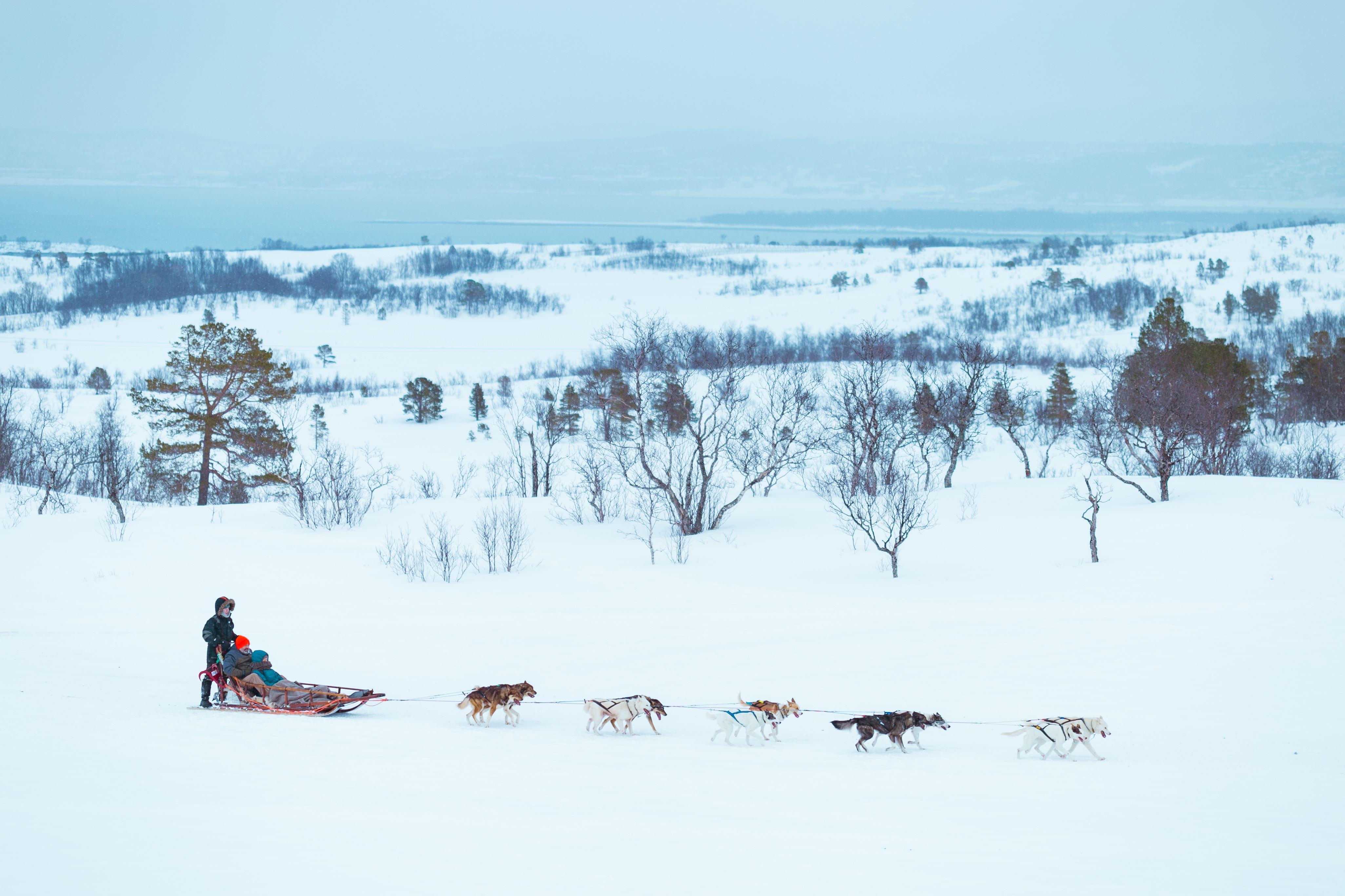 Hundesledeekspedisjon – to dager – Tromsø Villmarkssenter