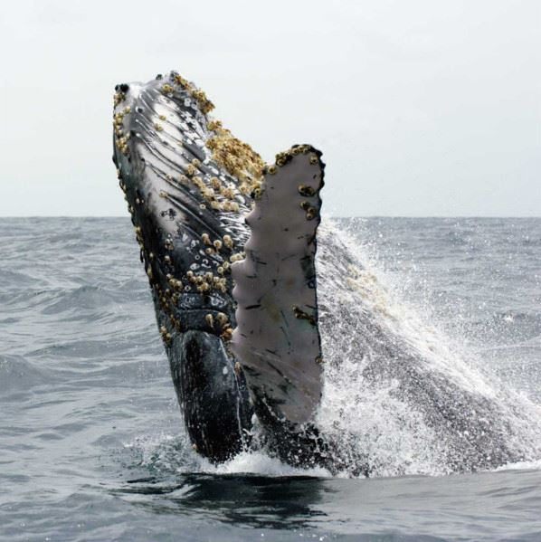 Whale Research Safari - Wild Seas