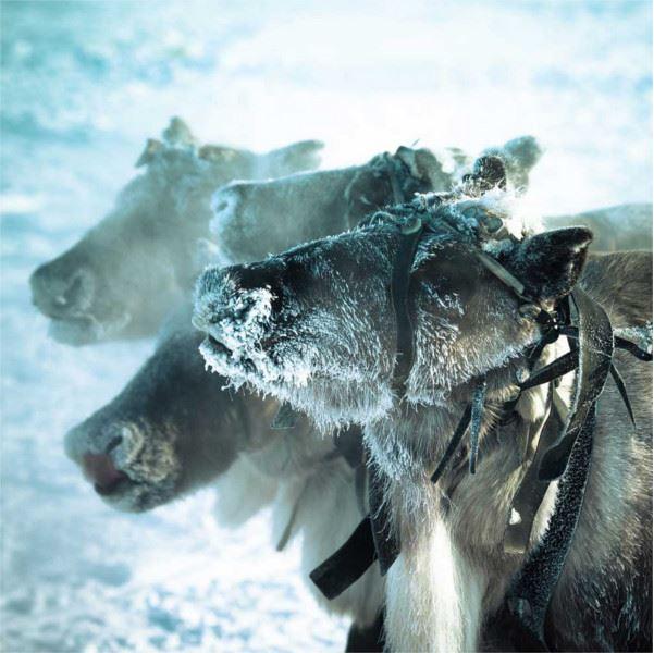 6-Day Tromsø and Senja Package - Whale Research Safari, Northern Lights and Reindeer Sledding - Wild Seas