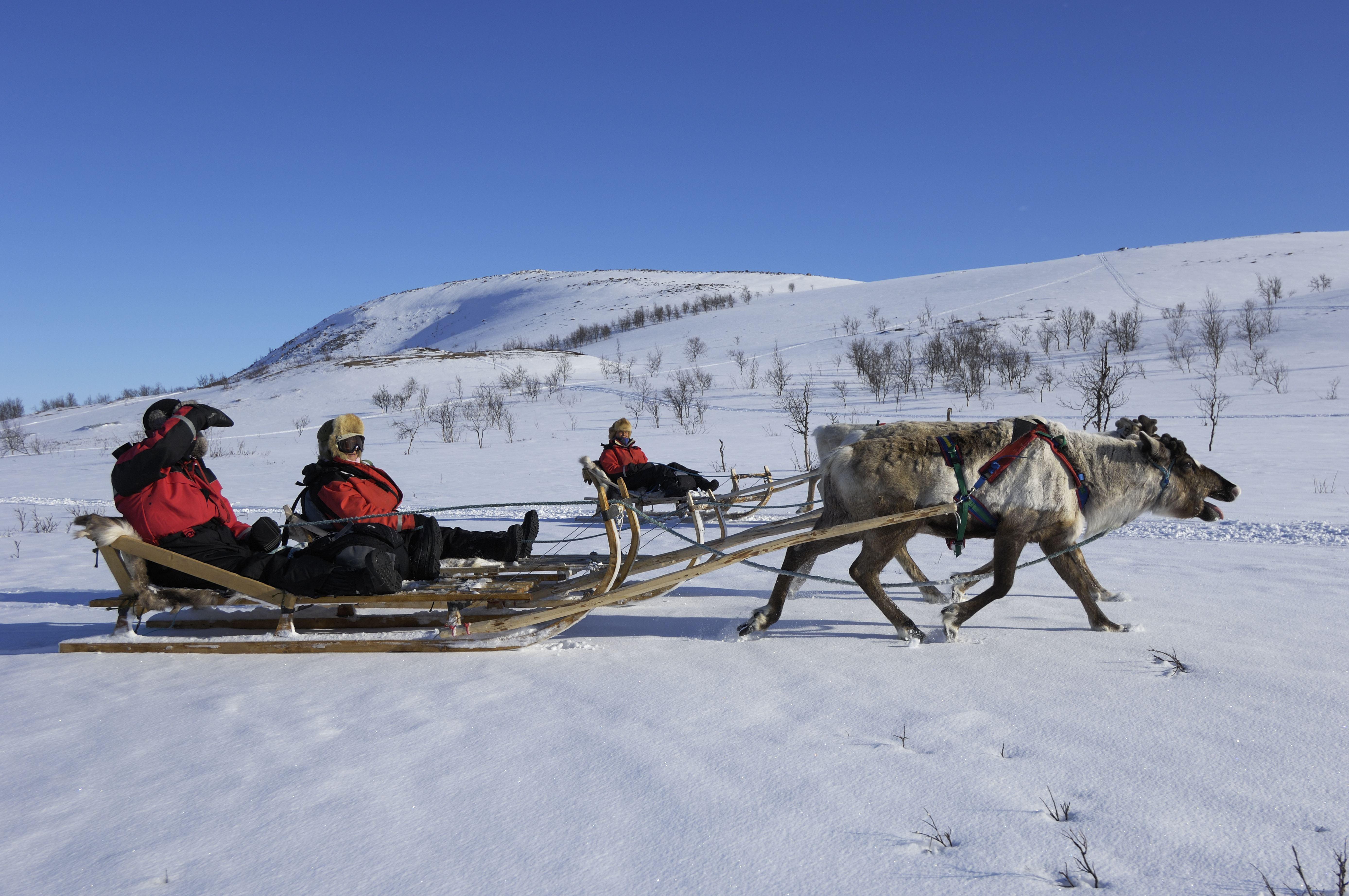 Reinsledekjøring på kanten av Tromsø – Dagtid – Aurora Alps