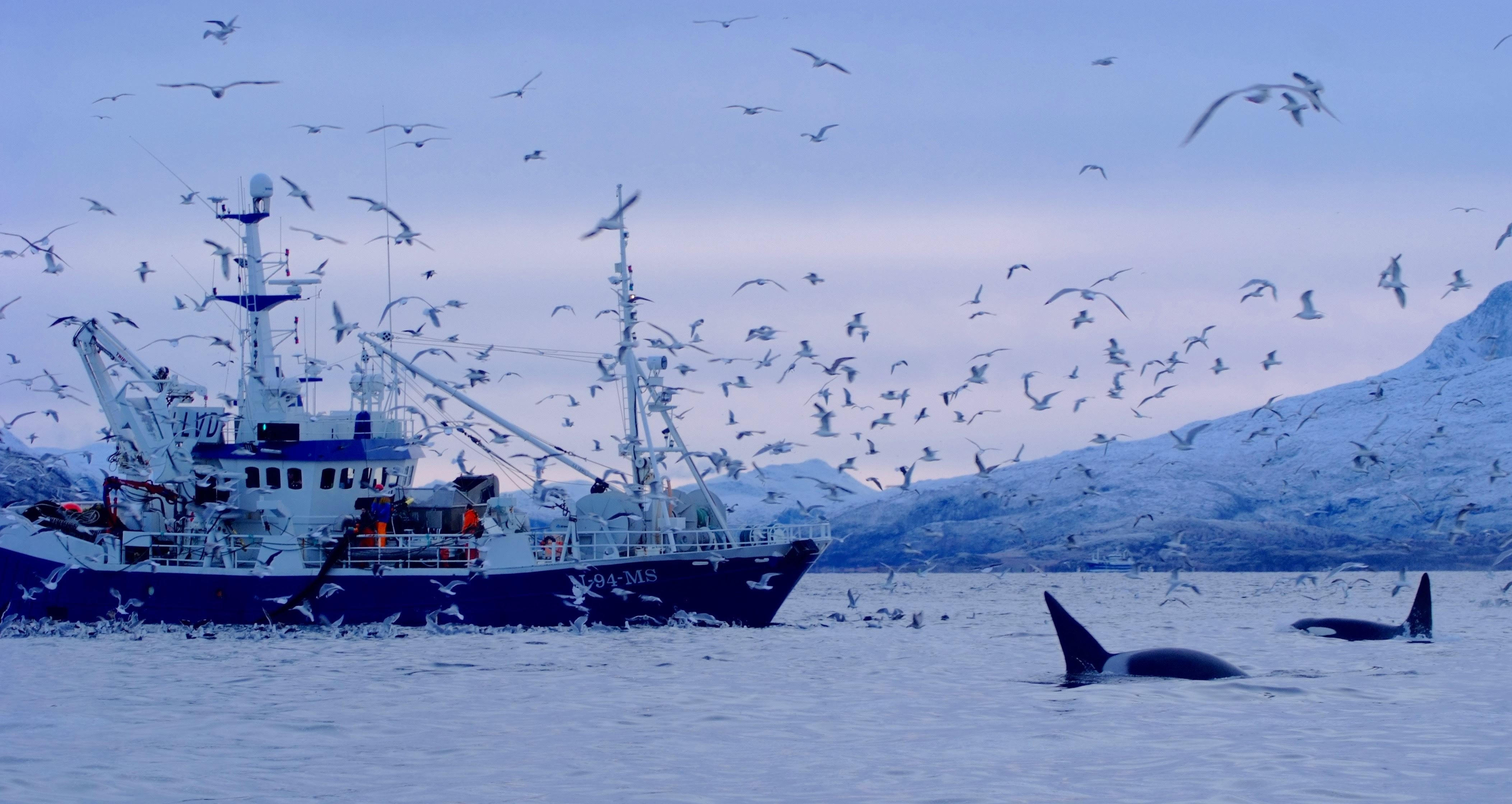 Olivier Pitras,  © 69Nord, 5 days and 6 nights whale watching & Northern Lights trip from Kvaløya with a 75' sailboat - 69Nord Sommarøy Outdoor Center