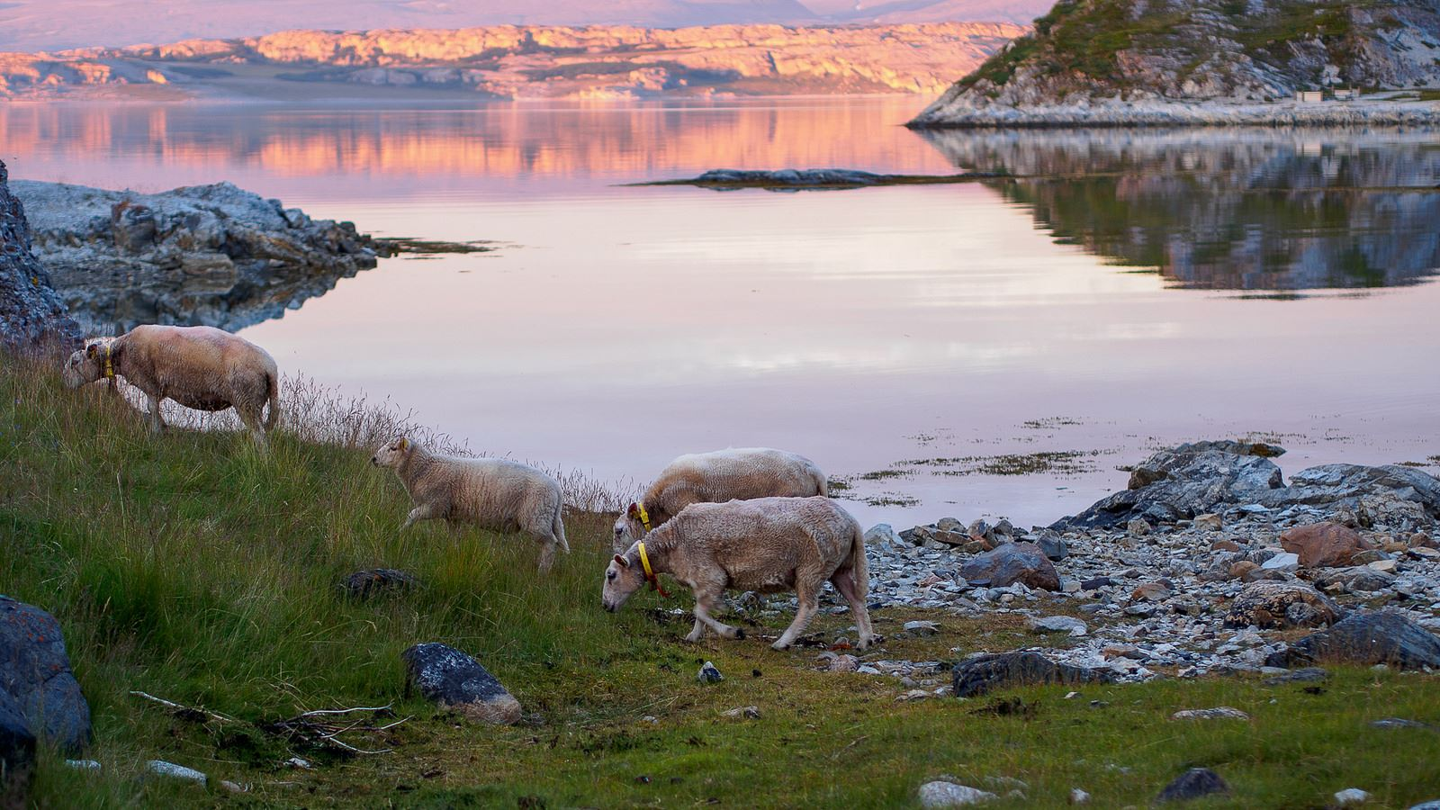 Polar Fjord Excursion from Tromso by Bus - Polar Adventures