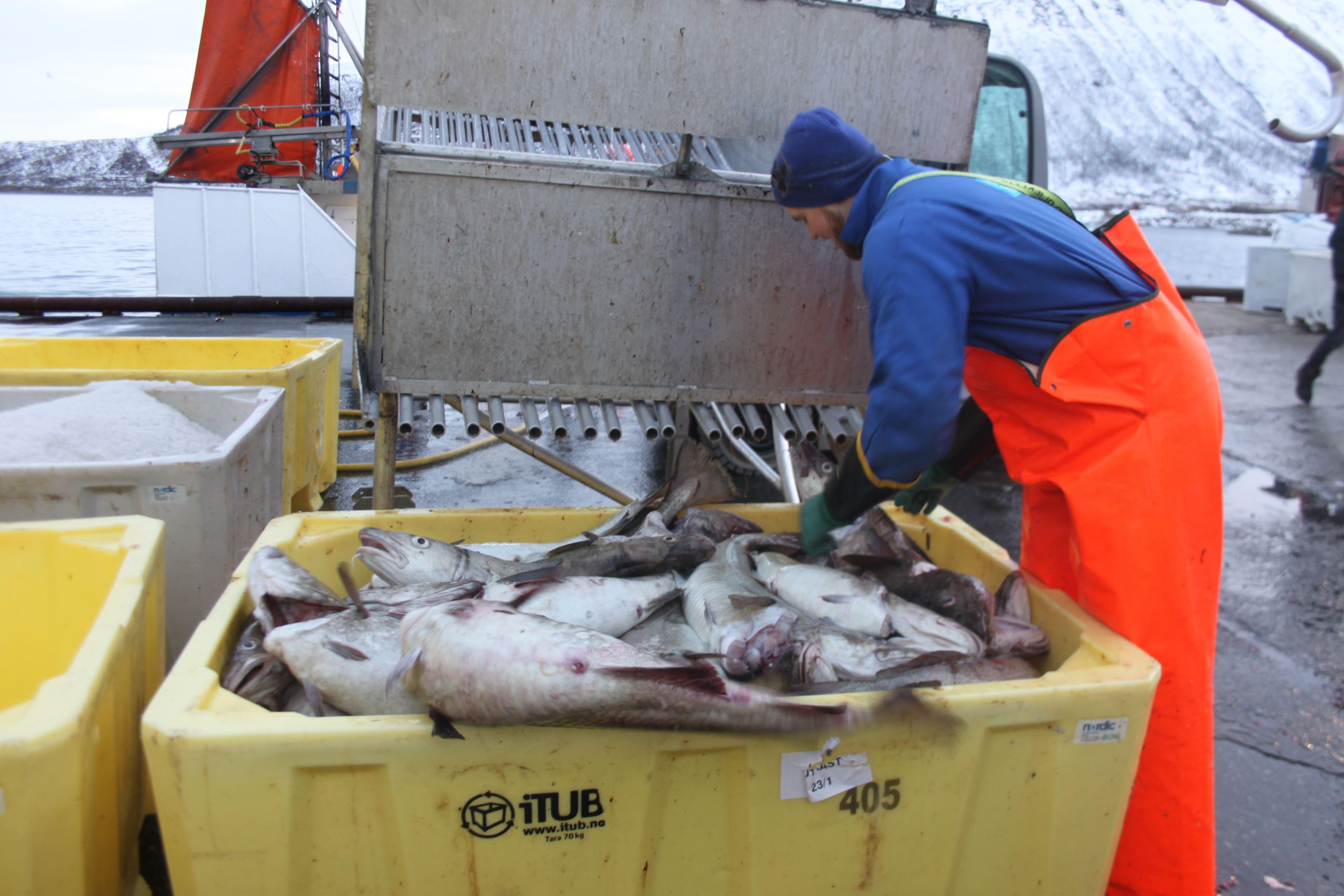 Polar Fishing Adventure from Tromsø – Polar Adventures